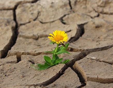flower-887443__340
