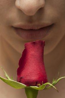 rosa-1838148__340