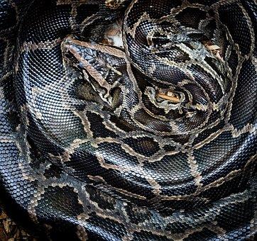python-1958052__340