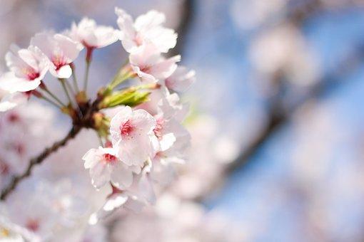 spring-2499270__340