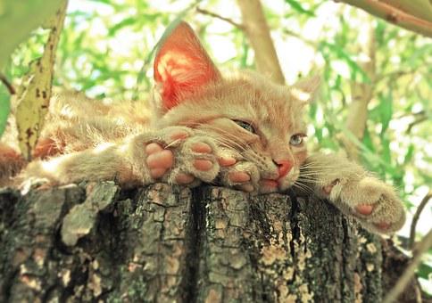 cat-1134289__340