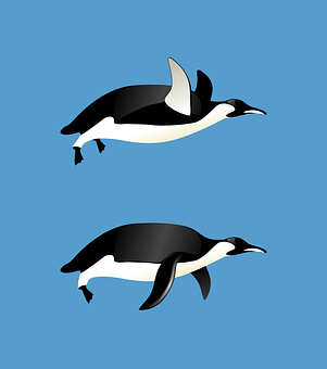 penguins-153976__340