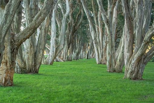 trees-340747__340