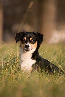 dog-3210220__340