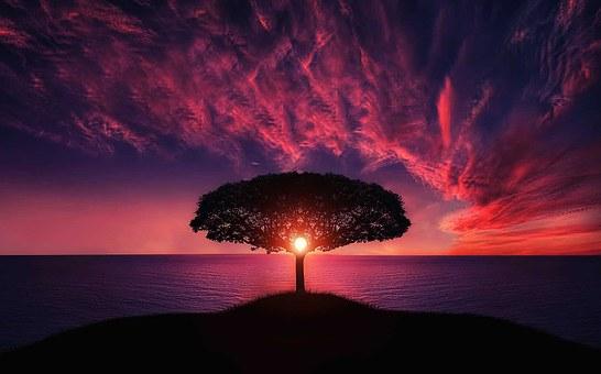 tree-736885__340