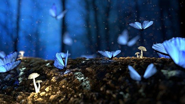 butterfly-2049567__340