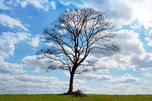 tree-164915__340