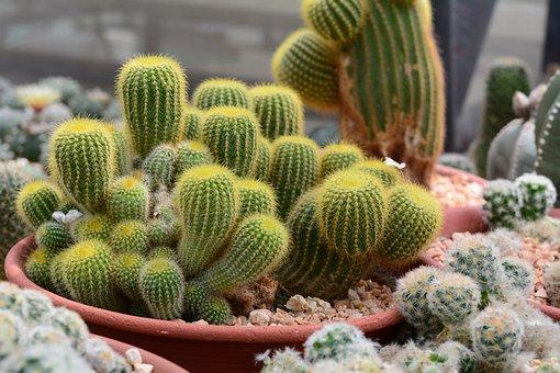 cactus-3664877__340