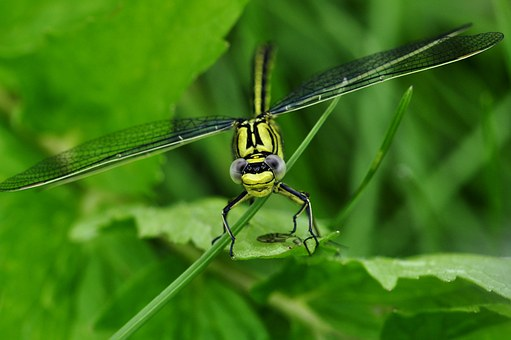 dragonfly-122794__340